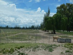 Mendoza: Tapiz
