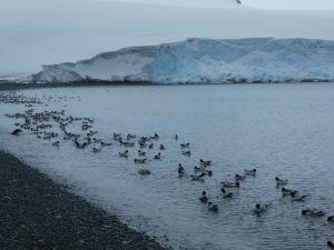 South Orkney Islands: Laurie Island, Base Naval Orcadas